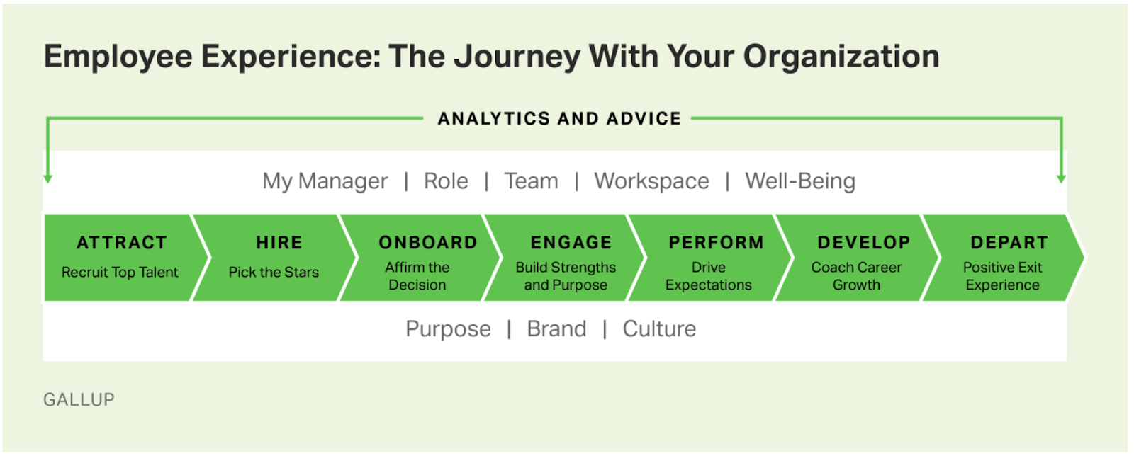 Gallup Employee Experience Journey